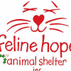 Outer Banks Animal Shelter Feline Hope