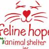 Outer Banks Animal Shelter Feline Hope