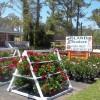 Manteo Island Produce and Garden