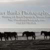 Outer Banks Photography