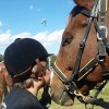 Mane & Taill Therapeutic Horsemanship Academy