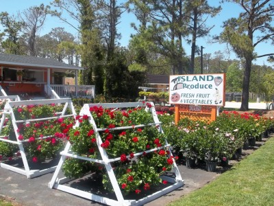 Island Produce and Garden MANTEO NC